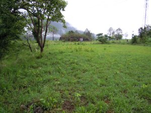 Plot / Land For Sale in  Nainital